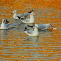 Утиное озеро :: Анжелика Носова