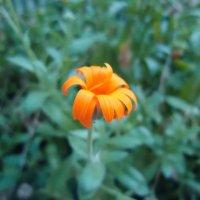 Одиночество в цвете :: Inessa Babich