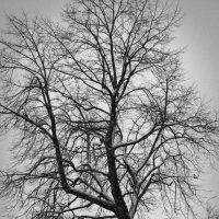 Зима... :: Елизавета Вавилова