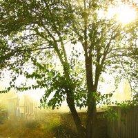 Осеннее солнце :: ольга хадыкина
