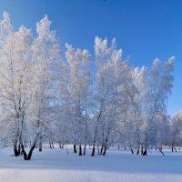 Новогодний наряд :: Николай Мальцев