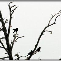 Четыре  птицы :: Геннадий Тарасков