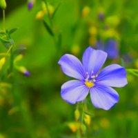 весенний цвет :: Juli Chaynikova