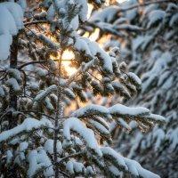 рассвет в лесу :: Игорь Погорелов