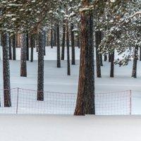 лес :: Игорь Погорелов