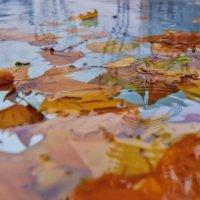 Осень :: Дмитрий Багаев
