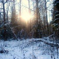 ещё про лес зимой :: Леонид Виноградов