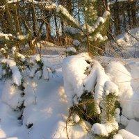 Скованные снегом :: Тамара Цилиакус