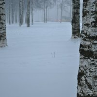 пришла зима :: Екатерина Яковлева