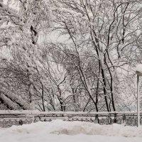 """Цветная романтика белой зимы... :: Евгений """"Белый"""" Печенный"""