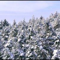 Зима :: Варвара Сорока