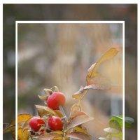 Три ягоды шиповника под осенним дождём :: Наталья Золотых-Сибирская