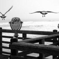 Птицы :: Николай Демидовец