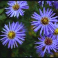 Цветочки :: Андрей Бойко