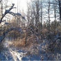 зима-2 :: hijsi sevole