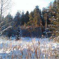 зима-1 :: hijsi sevole