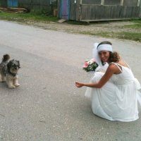 Невеста :: ИРИНА ЛОГИНОВА