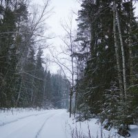 Зимний лес :: Ирина Рассветная