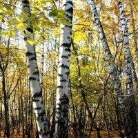 Осенний Лес :: Тамила Сагайдак