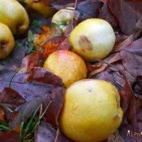Яблочная земля :: Alpha_ MaLiNa