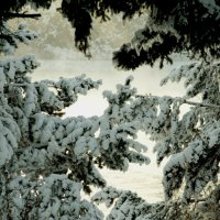 Орнамент  зимы :: Геннадий Тарасков