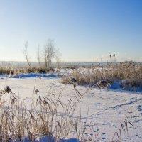 Замёрзшие болота :: Яков Реймер