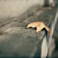 Leaf :: Anastasia GangLiON