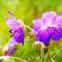 Цветы :: Наталья Красникова