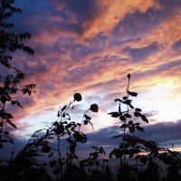 Закат в тишине. :: Егор 1 Бровцын