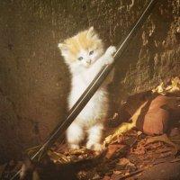 Коть :: Илья Бескаравайный