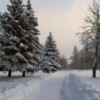 Эх, дороги :: Олег Попков