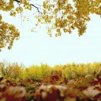 Осень... :: Элен Элен