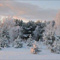 Под декабрьским солнцем... :: Андрей Воробьев
