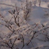 Морозный день :: Николай Рубанов