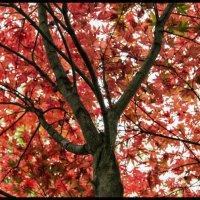 Классноватое дерево :: Андрей Бойко