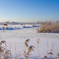 Замёрзшие болота 2 :: Яков Реймер