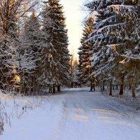 Свежий снег :: Олег Попков
