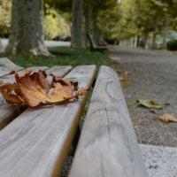 Осень в парке :: Sofia Rakitskaia