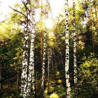 Солнечный свет. :: Дмитрий Фонарев