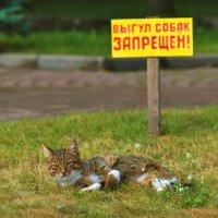 Котам можно не беспокоиться... :: Владимир Ноздрачев