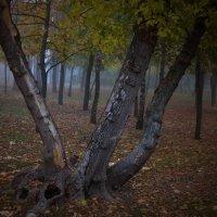 Утро в парке, октябрь... :: Михаил Светличный