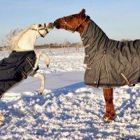 Большая любовь маленького пони! :))) :: София Гофман