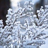 Зимние узоры... :: игорь козельцев