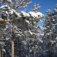 Снежные украшения :: Виктор Князев