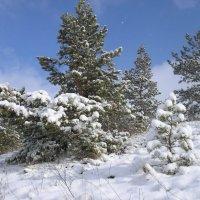 А снег идет... :: Виктор Князев