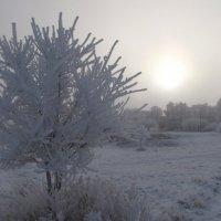 Холодно :: Виктор Князев