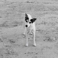 умная собака :: Юлия Закопайло