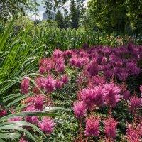 Цветочные джунгли :: Константин Фролов