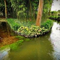 остров, где растет бамбук :: Александр Корчемный