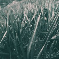 Мрачная трава :: Angelina Veshkelskaya